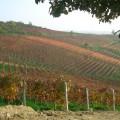 Azienda Agricola Fratelli Abrigo - Vigne a nebbiolo