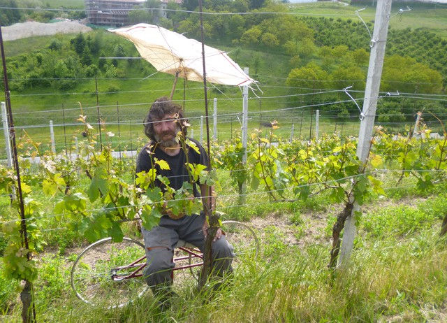 Working in the vineyards