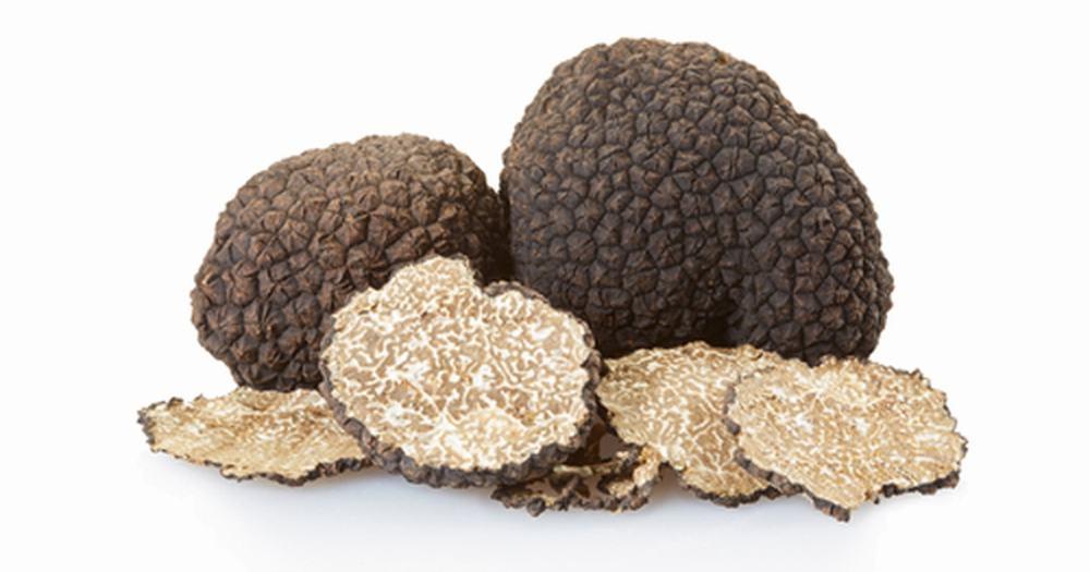 black truffle alba tartufi